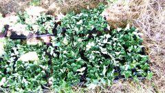 Farm inkubator: Prodaja živića jagoda