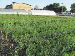 Srbiji nedostaje organska semenska proizvodnja